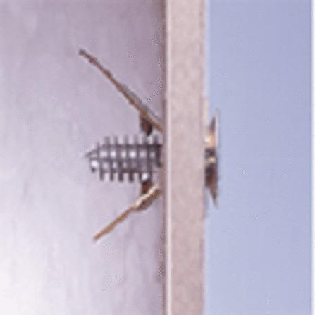 WALR BIS CHEV.GOLD 30X4MM-25PC